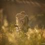 elopement_photographer_in_Siena_58