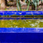 raining in jardin majorelle